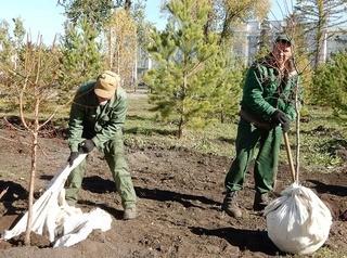 Озеленителей Омска сориентировали на новые районы города
