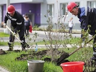 Компенсационные посадки деревьев обещают завершить в следующем году