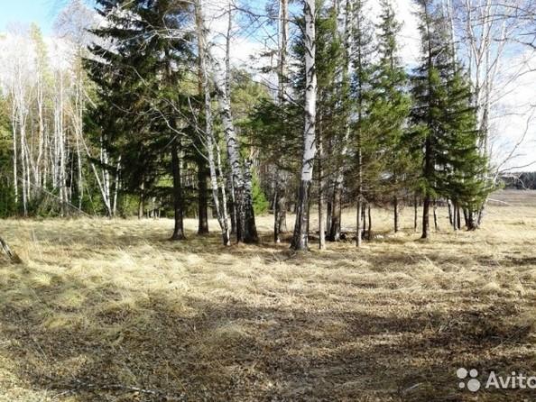 Продам  земельный участок, 35 соток, Емельяново. Фото 1.